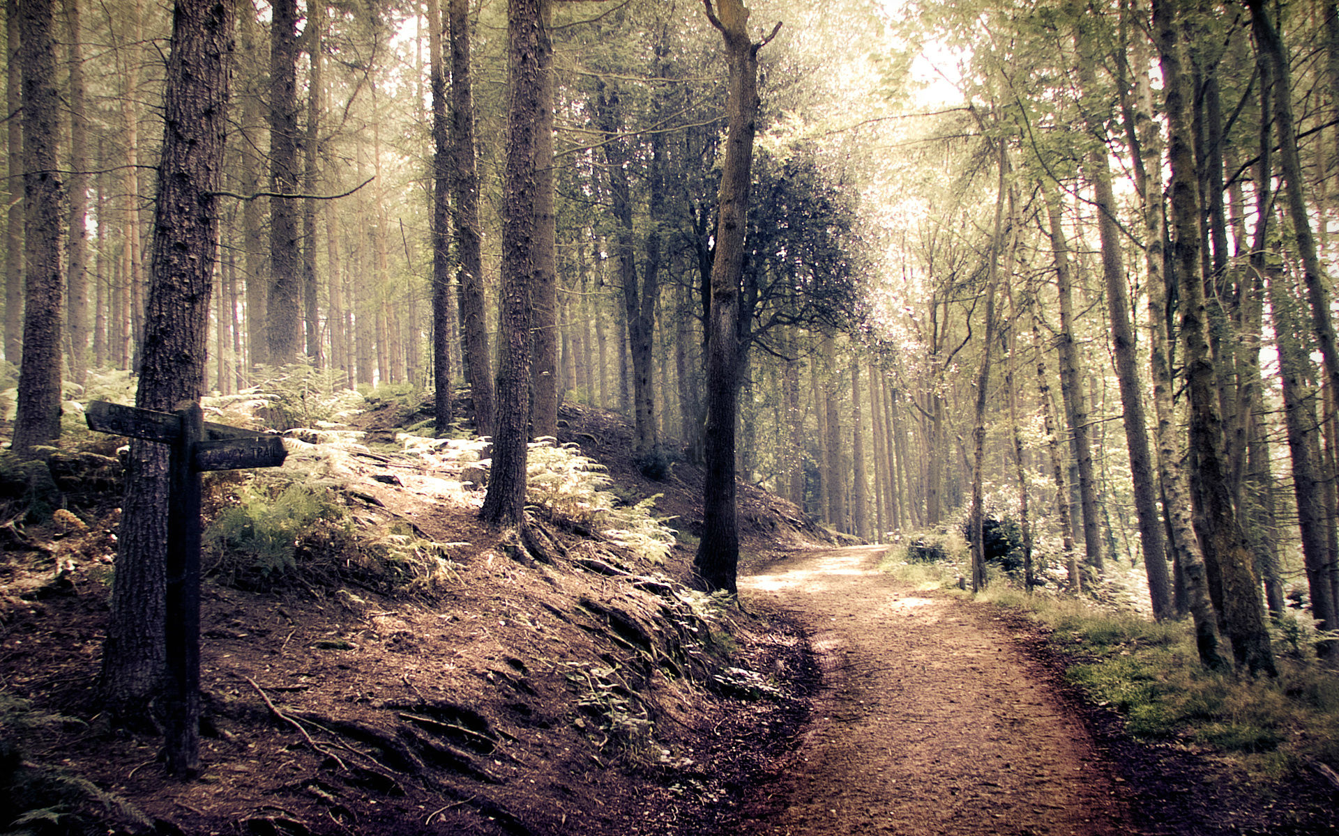 forest-path-images